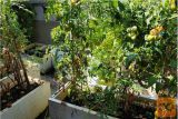 Samostojna Polovica Hiše Z Vrtom In Sadovnjakom
