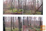 Gozd V Okolici Žužemberka