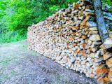 Prodam Brezova ter Bukova drva